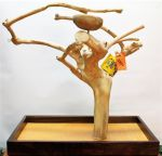 Med Tabletop Java Tree-Bird Paradise