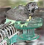 Quick Lock Bird Bath-Lixit
