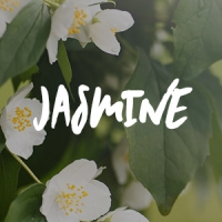 Jasmine Fragrance Oil *